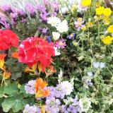「サクシアのお花がすごい!」の画像(3枚目)