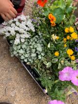 「季節のお花 saxia「サクシア」プランツパズル植物長持ち体験」の画像(2枚目)