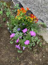 「季節のお花 saxia「サクシア」プランツパズル植物長持ち体験」の画像(3枚目)