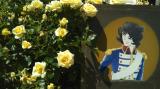京成バラ園に行ってきましたの画像(7枚目)