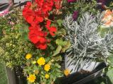 お花いっぱいのベランダ の2ヶ月後の画像(3枚目)