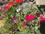 お花いっぱいのベランダ の2ヶ月後の画像(1枚目)