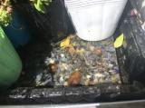 お花いっぱいのベランダ の2ヶ月後の画像(2枚目)