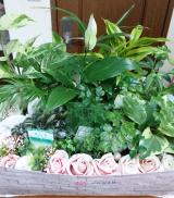 「モニター報告★観葉植物 saxia「サクシア」プランツパズル植物長持ち体験モニター!(3)」の画像(3枚目)