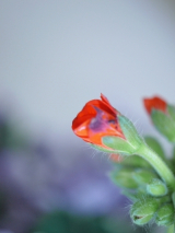 放ったらかしでも、育ってくれるお花達♪(*˘︶˘*).。.:*♡の画像(1枚目)