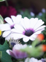 放ったらかしでも、育ってくれるお花達♪(*˘︶˘*).。.:*♡の画像(3枚目)