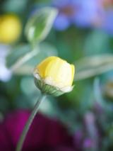 放ったらかしでも、育ってくれるお花達♪(*˘︶˘*).。.:*♡の画像(2枚目)