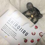 *新しいお布団が白汁でしゅ🐭10*@shirojiru  @fabius.jp @monipla_official 様ありがとうございます( * ॑˘ ॑* ) ⁾⁾ *ここ1ヶ月…のInstagram画像