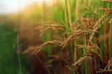 雑穀の良さとは?栄養や効果、メリット3つを伝授。長寿の里『デトッ穀』の口コミもの画像(2枚目)