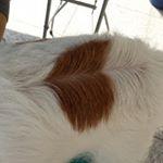 PEPPYの体脂肪率計りに行ったとき♥️作られちゃったね😀#jackrussellterrierlovers #jackrusselllovers #doglovers #jrt🐶 #jrt #j…のInstagram画像