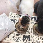 無添加キャットフードあげてみたら速攻でがっついてきてびっくり👏やっぱり猫ちゃんも美味しいもの食べたいよねカリカリ選ぶのもちょっと楽しい今日この頃🐱🐟...#無添加キャットフード安心…のInstagram画像