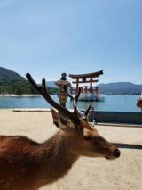 何十年か振りの広島旅行♪の画像(5枚目)