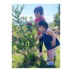 ♡⃜︎ブルーベリーの木に 興味津々なふたり👧🏻👶🏻💗最近使ってる ボディーソープ♡⃜︎まず 見た目が かわいすぎ( ⸝⸝⸝⁼̴́◡︎⁼̴̀⸝⸝⸝)…のInstagram画像