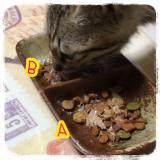 我が家の猫と マルモト株式会社様のわんちゃん・ねこちゃん専用の花かつおのご紹介!の画像(5枚目)