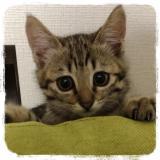 我が家の猫と マルモト株式会社様のわんちゃん・ねこちゃん専用の花かつおのご紹介!の画像(2枚目)
