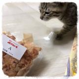 我が家の猫と マルモト株式会社様のわんちゃん・ねこちゃん専用の花かつおのご紹介!の画像(4枚目)