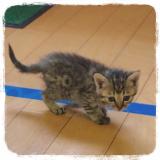 我が家の猫と マルモト株式会社様のわんちゃん・ねこちゃん専用の花かつおのご紹介!の画像(1枚目)