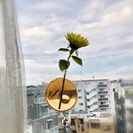 宙に浮いてるみたい。#アッシュコンセプト の+d #kaki#フラワーベース 窓に貼ってみた!やわらかい素材で、ガラスや鏡、タイルなどに繰り返し貼ってはがせますとっ…のInstagram画像