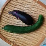 旬の野菜でお手軽浅漬け♪の画像(4枚目)