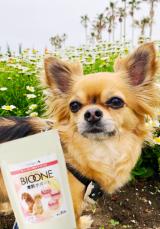 口コミ記事「愛犬用関節サポート!バイオワン!ベルたん♡食事中♡」の画像