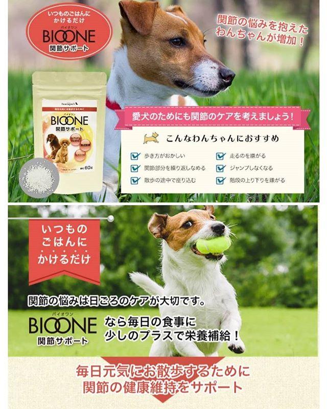 口コミ投稿:バイオワン 関節サポート愛犬と毎日の楽しいお散歩を応援!N-アセチルグルコサミン…