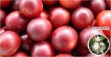 """「ビタミンC&ポリフェノールが世界一! スーパーフルーツ""""カムカム""""の果汁」の画像(3枚目)"""