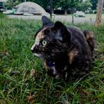 猫かわいい…この子の名前は「くろまめ」です。#kiso #基礎化粧品研究所 #美白 #ハイドロクリーム #ハイドロキノン #monipla #kisocare_fanのInstagram画像