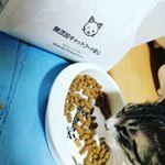 つかちゃん♡カリカリ変えてみたところすごい食い付きー!無添加っていいね♫#キャットフード #無添加キャットフード #無添加安心本舗 #monipla #dogfoodmutenkaho…のInstagram画像