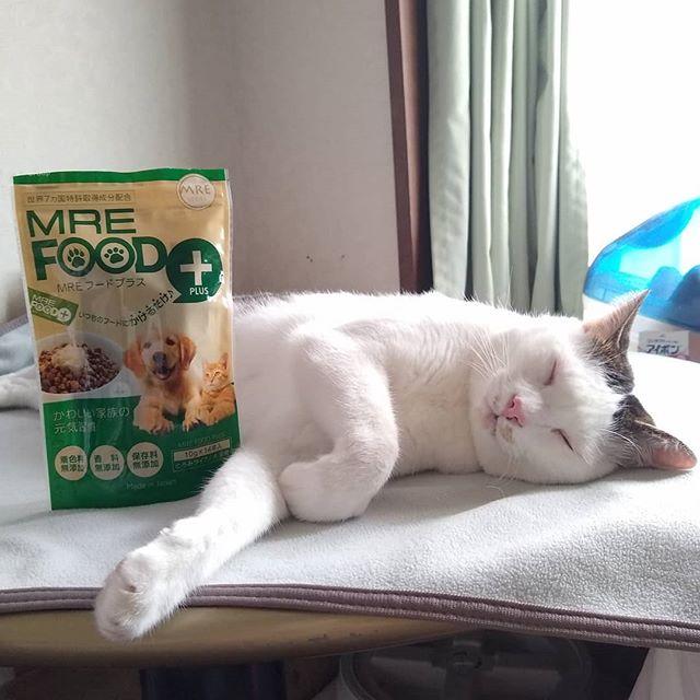 口コミ投稿:平和な寝顔😻いつまでも長生きしてほしいもんです。愛犬・愛猫用健康サポートジュレ「…