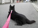 犬用コラーゲンサプリメント「健・ドッグ」1ケ月モニターの画像(7枚目)