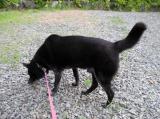 犬用コラーゲンサプリメント「健・ドッグ」1ケ月モニターの画像(6枚目)
