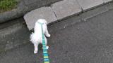 太郎と散歩の画像(4枚目)