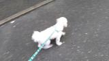 太郎と散歩の画像(2枚目)