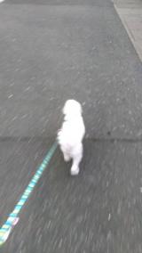 太郎と散歩の画像(1枚目)