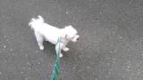 太郎と散歩の画像(5枚目)