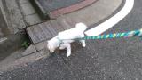 太郎と散歩の画像(3枚目)