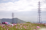 「3本のレンズで摂る野田のコスモス畑」の画像(1枚目)