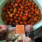🍀趣味は家庭菜園🍀全部お庭で作ったお野菜なんです。 🍅ミニトマト🍅とビーツのスープレシピミニトマトとビーツと擦ったニンニクを煮込み水を少量 ♪グツグツ煮込んで塩胡椒と✨まるごとキューブだし…のInstagram画像