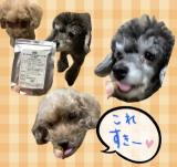 口コミ記事「ペット用キングアガリクス100」の画像