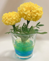 カラーエコゼリーでお花を飾ってみた(^^)の画像(2枚目)