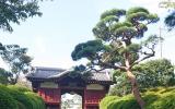 護国寺をめぐる歴史散策の画像(2枚目)