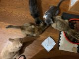 無添加キャットフード安心 猫が好きな味のようだの画像(7枚目)
