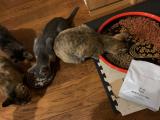 無添加キャットフード安心 猫が好きな味のようだの画像(6枚目)