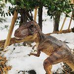 リアルなフィギュア #papo の#tレックス ちゃん!をご紹介。papoはリアルな動物から恐竜、ドラゴンまで、600種類以上のバラエティ豊富な商品ラインナップ!精巧なデザインを楽しむもよ…のInstagram画像