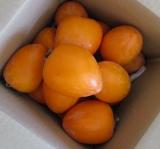 季節仕事・干し柿の画像(1枚目)