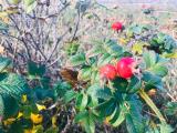 冬のホワイト小花柄スカート 北海道⑧ 稚内-オトンルイ発電所 おやすみアロマソープの画像(5枚目)
