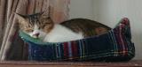 かわいい愛猫にはやっぱりいい餌を与えたい‼️の画像(7枚目)