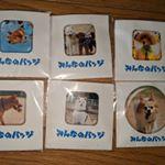 プリンちゃんにプレゼントするものとモニターで頂いたものを撮影しました。これでお出かけのときも3匹と一緒。#犬#いぬ#いぬばか#犬バカ#愛犬#アイドルドック #小型犬#中型犬 #柴犬#白柴#…のInstagram画像