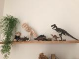 「「アンクルミルトン 恐竜発掘キット ティラノサウルス (ミニ スピノサウルス 模型付き)」☆」の画像(10枚目)