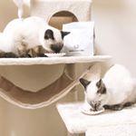 ストーリーズではいやってほど見てると思いますが保護猫を2匹お迎えしました🐈まだ4ヶ月半くらいでとにかくやんちゃ😂❤️ドッグフード無添加安心本…のInstagram画像